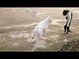 Кот встал на задние лапы